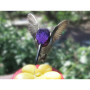 Costa Hummingbird with purplely blue crown color drinks from small handheld feeder