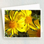 Yellow Together Greeting Card