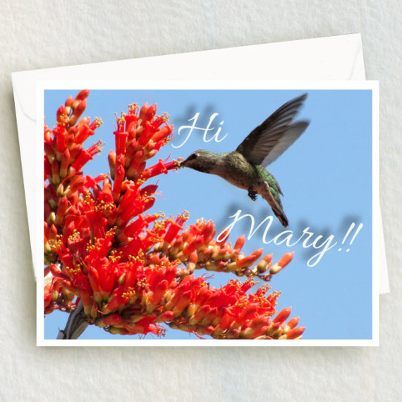 Hummingbird sticks beak and proboscis into a red orange Ocotillo flower