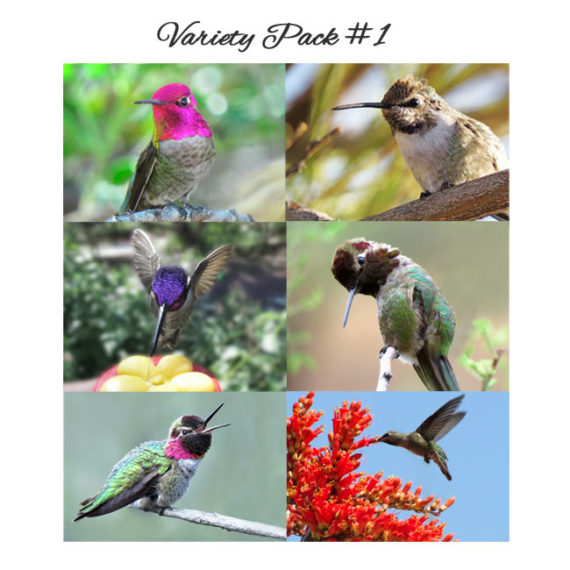 6 photos in Variety Pack 1 all hummingbirds