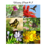 2 each Hummingbirds, Butterflies and Flowers cards in this Variety Pack 3