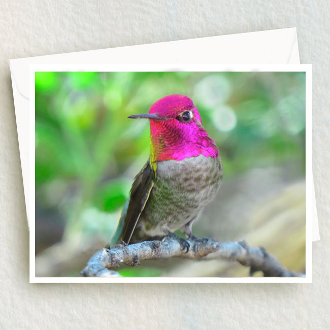 Anna hummingbird rosy pink crown 1 photoprogressions anna iridescent rosy pink hummingbird greeting card m4hsunfo