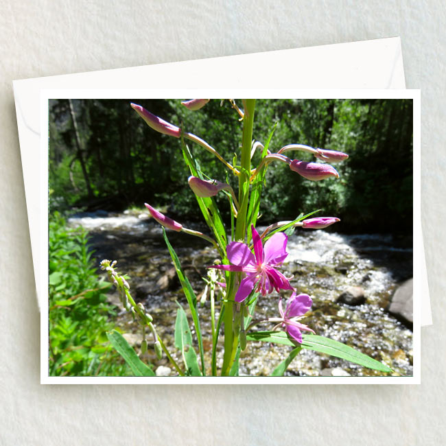 Pink Flowers stand tall in front of Lost Creek