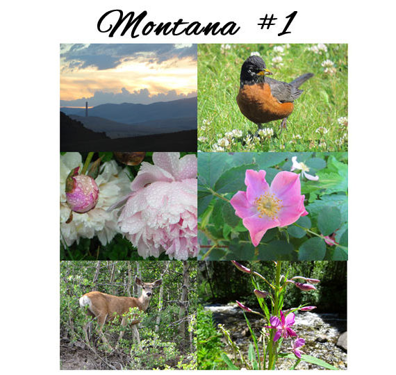 The six images in the Montana 1 variety pack.