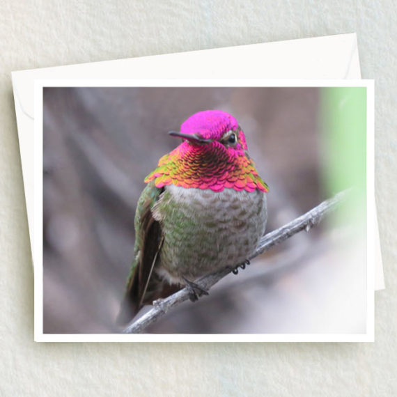 Anna male hummingbird shows off his brilliant pink and green feathers covering his head.