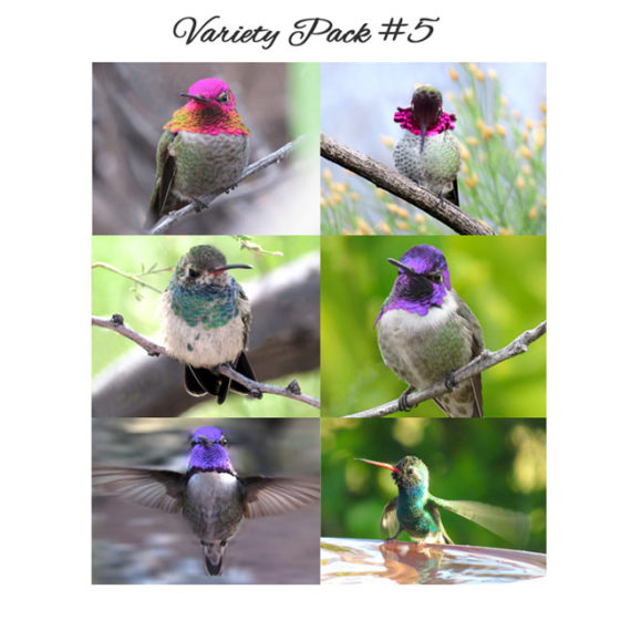 Six different hummingbird cards