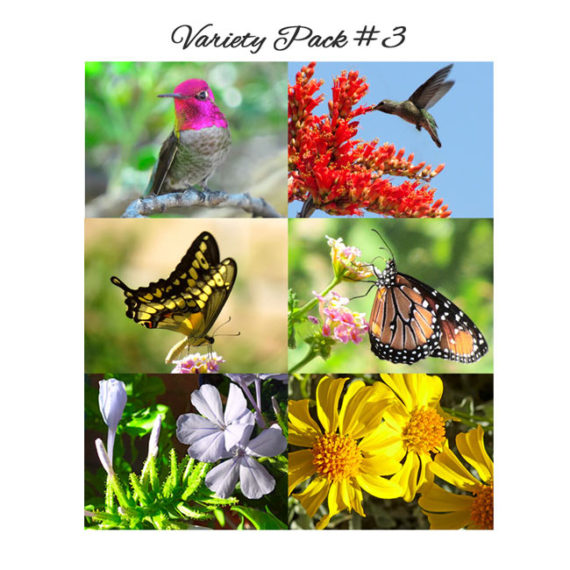 2 Hummingbird, 2 Butterfly and 2 Flower cards in this Variety Pack 3