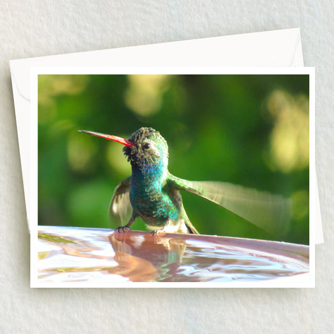 Broad-billed Hummingbird flutters his wings at the bath.